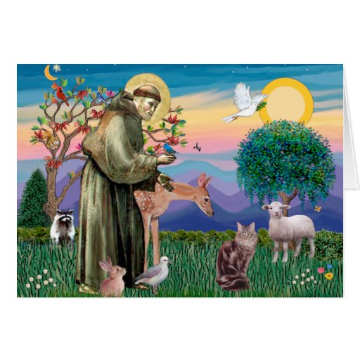 Maine Coon Cat  - St Francis Greeting Card