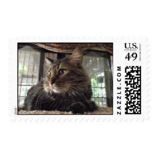 Maine Coon cat stamps