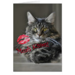 Maine Coon Cat Valentine's Greeting Card