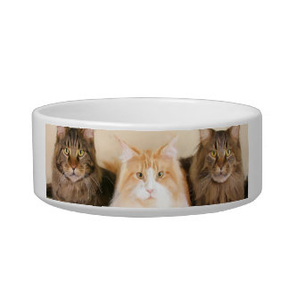 Maine Coon Cats Bowl