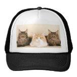 Maine coon Cats Cap Trucker Hat