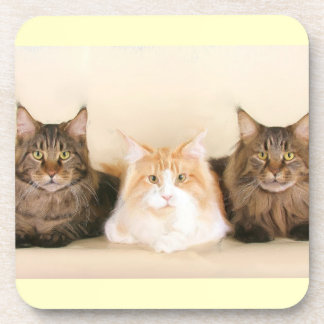 Maine Coon Cats Coaster
