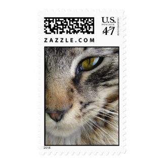 Maine Coon Cat's Eye Postage