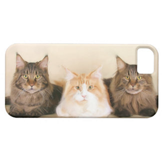 Maine Coon Cats iPhone SE/5/5s Case