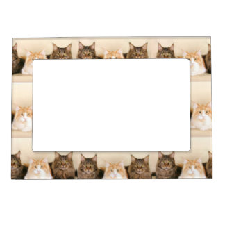 Maine Coon Cats Magnetic Frame