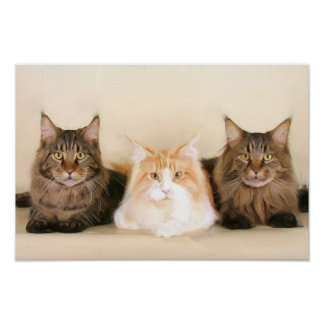 Maine coon cats poster