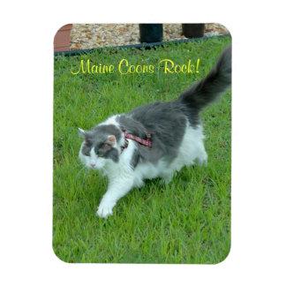 Maine coon cats rock Premium Magnet