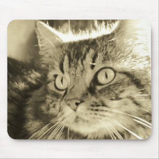 Maine Coon Face 2 Mouse Pad