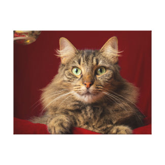 Maine Coon for Christmas with collector Canvas Print