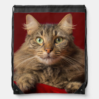 Maine Coon for Christmas with collector Drawstring Backpack