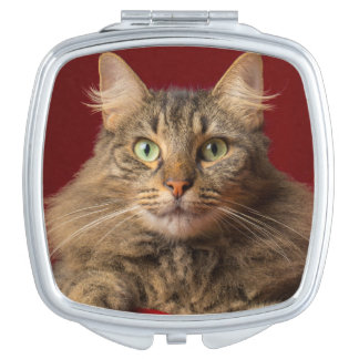 Maine Coon for Christmas with collector Vanity Mirror