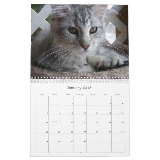 Maine Coon Kitten Calendar