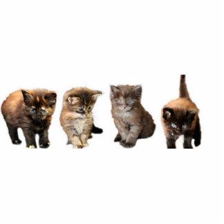 Maine Coon Kitten Cutout