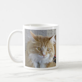 Maine Coon Kitten Face Close-Up Photograph Coffee Mug