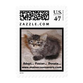 Maine Coon Kitten Postage