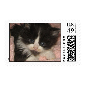 Maine Coon Kitten Postage Stamp