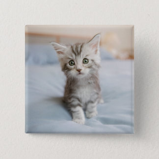 Maine Coon Kitten Sitting On Bed Button