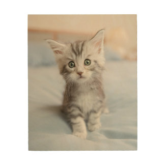 Maine Coon Kitten Sitting On Bed Wood Wall Art