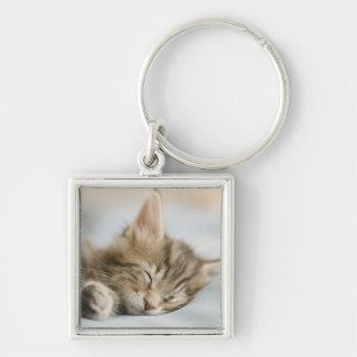 Maine Coon Kitten Sleeping Keychain