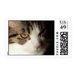 Maine Coon kitten stamp