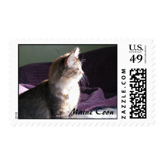 Maine Coon Kitten Stamps