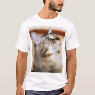 Maine Coon Kitten T Shirt, Silver Tortie Male T-Shirt