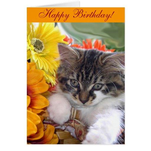 Maine Coon Kitty Cat Kitten Looking Away, Flowers Card