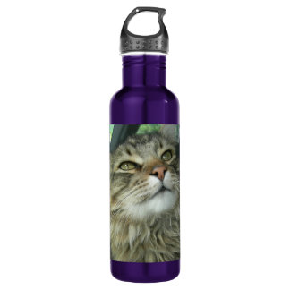 Maine Coon kitty 24oz Water Bottle