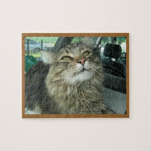 Maine Coon kitty Puzzles