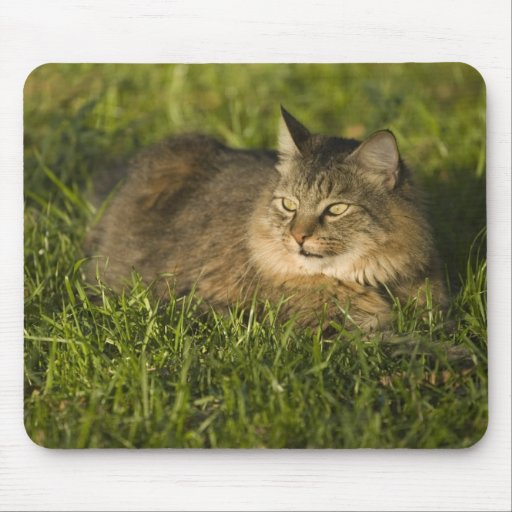 Maine coon (largest breed of domestic cats) mouse pad