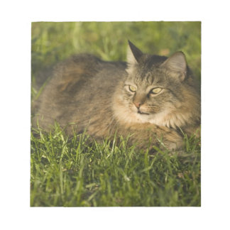 Maine coon (largest breed of domestic cats) note pad