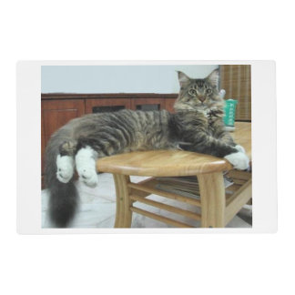 maine coon laying 2 placemat