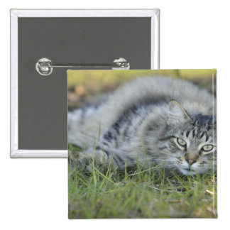 Maine Coon laying in grass, Central Florida. 2 Inch Square Button