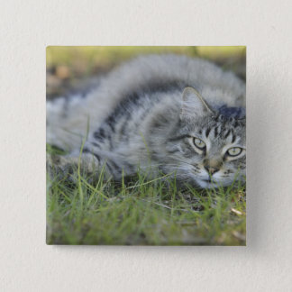 Maine Coon laying in grass, Central Florida. Pinback Button