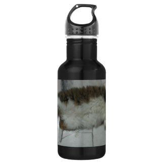 maine coon laying.png 18oz water bottle