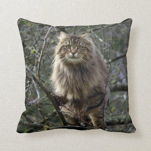 Maine Coon Long-hair Tabby Cat Animal Pet Pillows Zazzle