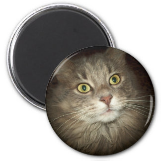 Maine Coon Refrigerator Magnets