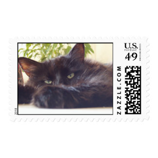 Maine Coon Mailing Postage