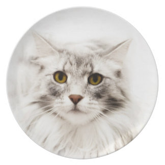Maine Coon Plate