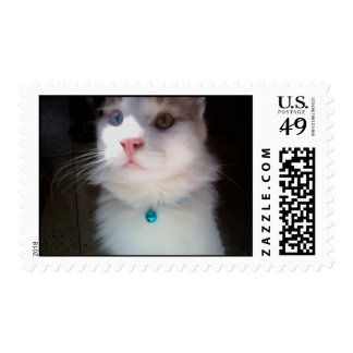 Maine Coon Postage Stamps