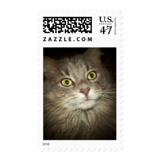 Maine Coon Postage