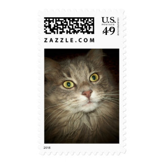 Maine Coon Stamps