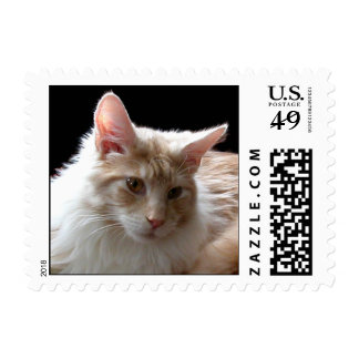 Maine Coon postage stamp
