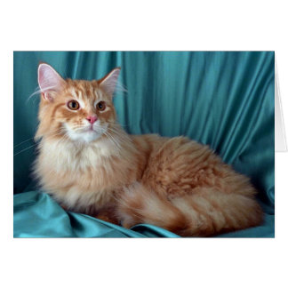 Maine Coon red tabby Greeting Cards