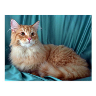 Maine Coon red tabby Post Cards