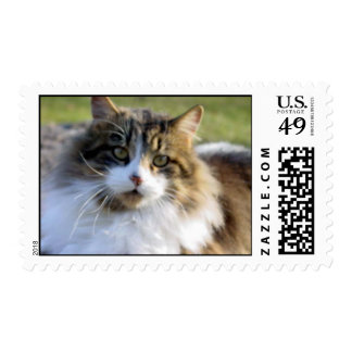 Maine Coon rescue cat Postage Stamps