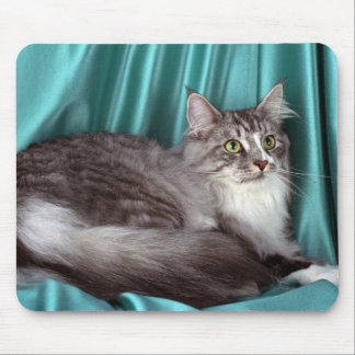 Maine Coon, silver tabby Mouse Pad