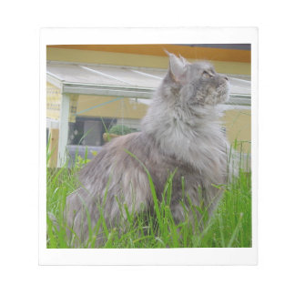 maine coon sitting 3 notepad