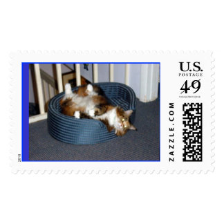 Maine Coon Spa Day Stamps