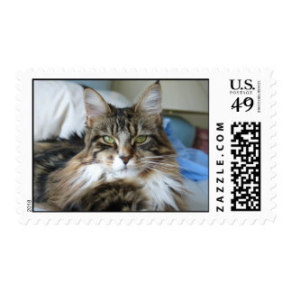 Maine Coon Stare Postage